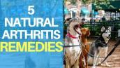 Natural Remedies For Dog Arthritis Pain: Top 5 Quick Treatments
